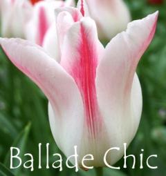 Ballade Chic