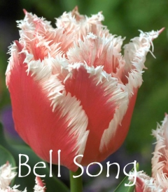 Bell Song