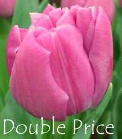 Double Price