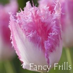Fancy Frills