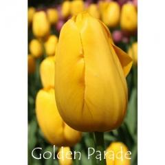 Golden Parade